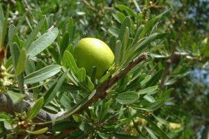 Argan Oil For Dry Skin